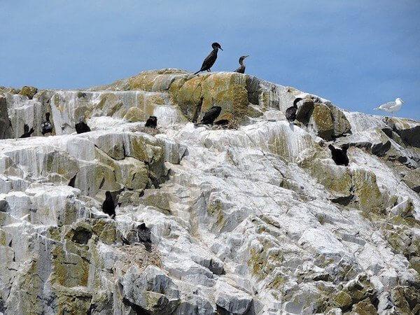 "<a href=""https://www.flickr.com/photos/andrea_44/19452453168/in/photolist-38ELfM-38K8jh-38EyBH-38KkHu-38ENaa-38EyXP-vCWUBA-vUWF7C"" target=""_blank"" rel=""noopener"">Birdlife on Mitlenatch Island nature reserve</a> by Andrea_44 via Flickr (CC BY SA, 2.0 License)"