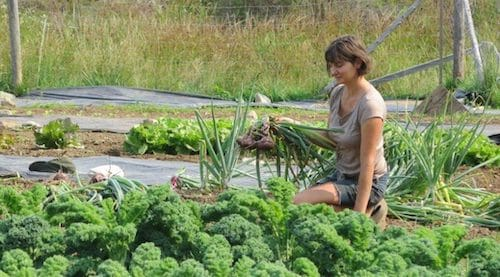 BIG Fir Farm: Local Food