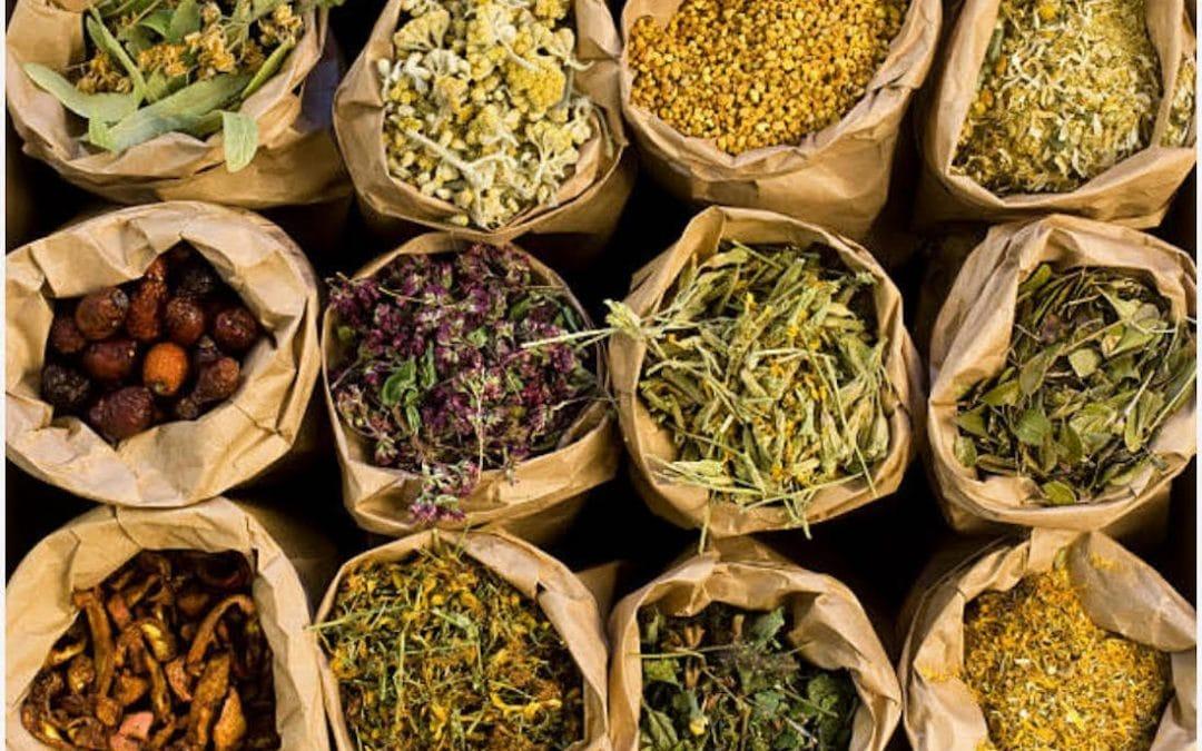 Folk U Friday: Herbal Medicine 101