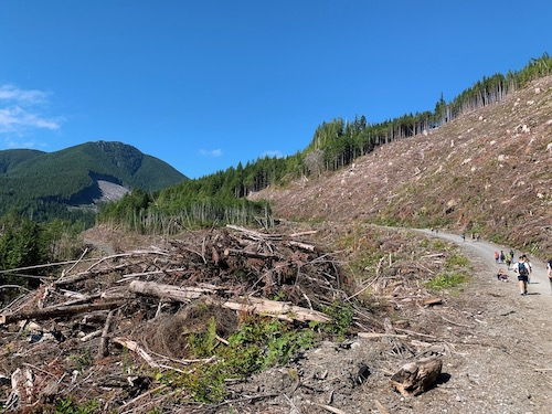 Leagl issues as a group of people walk along a road through a clearcut