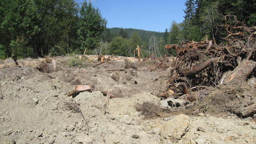a landscape of tossed earth, stumps and branches