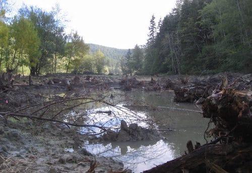 Fish will return to the Dillon Creek wetland restoration